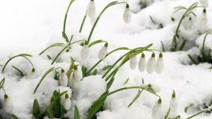 babele martie