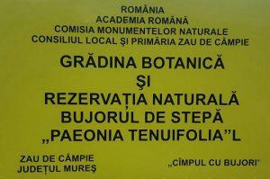 bujor romanesc