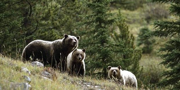 brasov bear reservation